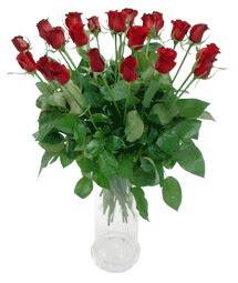 Rize çiçek online çiçek siparişi  11 adet kimizi gülün ihtisami cam yada mika vazo modeli