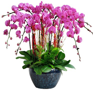 9 dallı mor orkide  Rize ucuz çiçek gönder