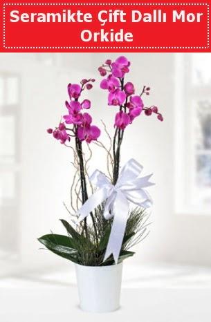 Seramikte Çift Dallı Mor Orkide  Rize hediye çiçek yolla
