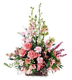 Rize kaliteli taze ve ucuz çiçekler  mevsim çiçeklerinden özel