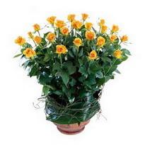 Rize çiçek satışı  10 adet sari gül tanzim cam yada mika vazoda çiçek