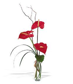 Rize online çiçekçi , çiçek siparişi  cam yada mika Vazoda 3 adet  antoryum