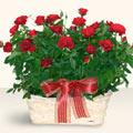 Rize uluslararası çiçek gönderme  11 adet kirmizi gül sepette