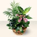 Rize çiçek servisi , çiçekçi adresleri  5 adet canli çiçek sepette