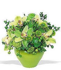 cam yada mika vazoda 5 adet orkide   Rize cicek , cicekci