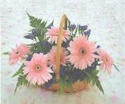 gerbera çiçeklerinde sepet   Rize anneler günü çiçek yolla