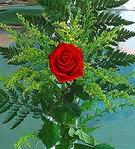 1 adet kirmizi gül buketi   Rize çiçek yolla