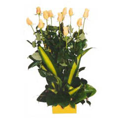 12 adet beyaz gül aranjmani  Rize internetten çiçek siparişi