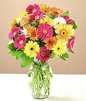 Rize çiçek siparişi sitesi  17 adet karisik gerbera