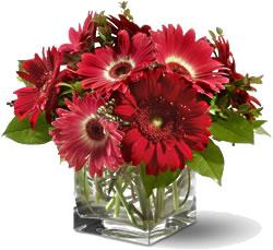 9 adet gerbera çiçegi cam vazoda