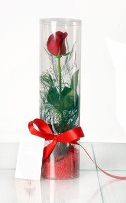Rize anneler günü çiçek yolla  Silindir vazoda tek kirmizi gül