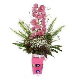 Rize güvenli kaliteli hızlı çiçek  cam yada mika vazo içerisinde tek dal orkide çiçegi