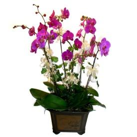 Rize çiçekçi telefonları  4 adet orkide çiçegi