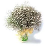 Rize çiçekçiler  cam yada mika vazo içerisinde cipsofilya demeti