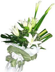 Rize çiçek siparişi vermek  3 dal kazablanka çiçegi ve yesillikler
