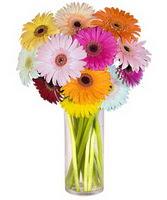 Rize çiçek gönderme sitemiz güvenlidir  Farkli renklerde 15 adet gerbera çiçegi