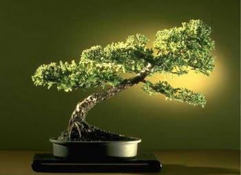 ithal bonsai saksi çiçegi  Rize yurtiçi ve yurtdışı çiçek siparişi