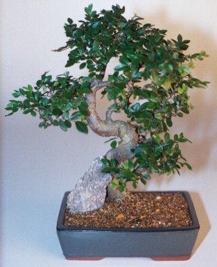 Rize 14 şubat sevgililer günü çiçek  ithal bonsai saksi çiçegi  Rize online çiçekçi , çiçek siparişi