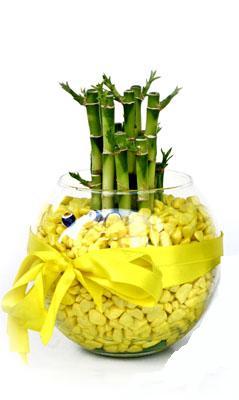 cam fanus içerisinde bambo  Rize çiçek yolla , çiçek gönder , çiçekçi
