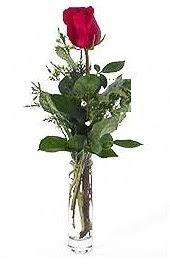 Vazo içerisinde 1 adet kirmizi gül  Rize çiçek satışı