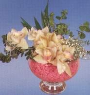 Rize çiçekçiler  Dal orkide kalite bir hediye