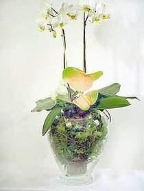Rize çiçek servisi , çiçekçi adresleri  Cam yada mika vazoda özel orkideler