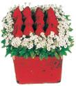Rize hediye sevgilime hediye çiçek  Kare cam yada mika içinde kirmizi güller - anneler günü seçimi özel çiçek