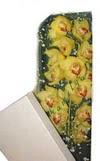 Rize hediye sevgilime hediye çiçek  Kutu içerisine dal cymbidium orkide