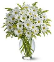 Vazo içerisinde beyaz krizantem çiçekleri  Rize yurtiçi ve yurtdışı çiçek siparişi