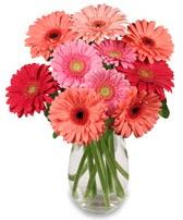 vazo içerisinde 13 adet gerbera çiçeği  Rize online çiçekçi , çiçek siparişi