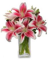 Vazo içerisinde 5 dal kazablanka çiçeği  Rize çiçek satışı