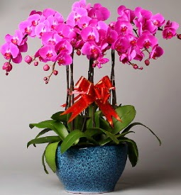 7 dallı mor orkide  Rize çiçek siparişi sitesi