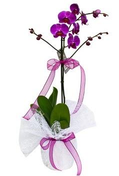 Tek dallı mor orkide  Rize çiçek online çiçek siparişi