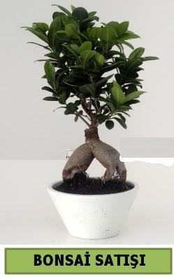 Bonsai japon ağacı satışı  Rize internetten çiçek satışı