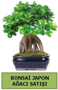Bonsai japon ağacı satışı  Rize çiçek servisi , çiçekçi adresleri