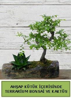 Ahşap kütük bonsai kaktüs teraryum  Rize çiçek gönderme sitemiz güvenlidir