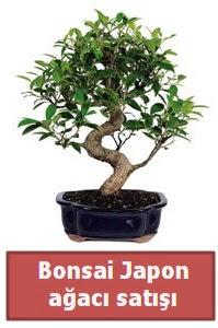 Japon ağacı bonsai satışı  Rize online çiçekçi , çiçek siparişi