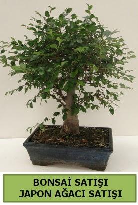 Minyatür bonsai japon ağacı satışı  Rize 14 şubat sevgililer günü çiçek