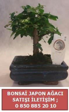 Japon ağacı minyaür bonsai satışı  Rize çiçek servisi , çiçekçi adresleri