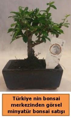 Japon ağacı bonsai satışı ithal görsel  Rize anneler günü çiçek yolla