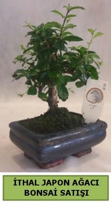 İthal japon ağacı bonsai bitkisi satışı  Rize çiçek online çiçek siparişi