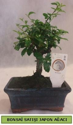 Minyatür bonsai ağacı satışı  Rize hediye sevgilime hediye çiçek