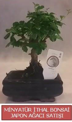 Küçük görsel bonsai japon ağacı bitkisi  Rize çiçek mağazası , çiçekçi adresleri