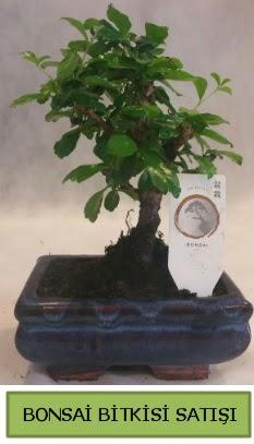 Bonsai ithal görsel minyatür japon ağacı  Rize kaliteli taze ve ucuz çiçekler