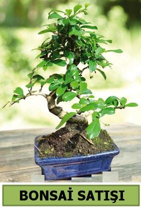 Çam bonsai japon ağacı satışı  Rize çiçek servisi , çiçekçi adresleri