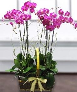 7 dallı mor lila orkide  Rize 14 şubat sevgililer günü çiçek