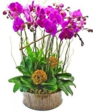 Ahşap kütükte lila mor orkide 8 li  Rize çiçek yolla , çiçek gönder , çiçekçi