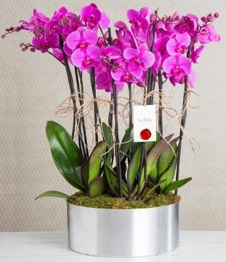 11 dallı mor orkide metal vazoda  Rize 14 şubat sevgililer günü çiçek