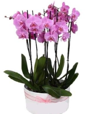 Beyaz seramik içerisinde 7 dallı mor orkide  Rize çiçek online çiçek siparişi