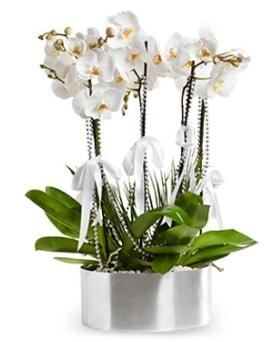 Beş dallı metal saksıda beyaz orkide  Rize anneler günü çiçek yolla